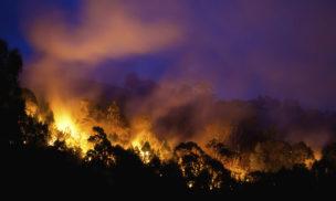 Bushfire near Newcastle, NSW.