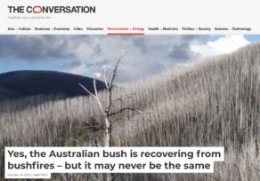 Australian bushfires: what will recovery look like?